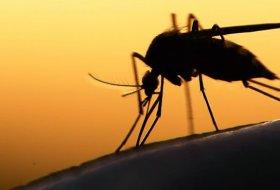 Google'a Bağlı Birim Verily, Doğaya 20 Milyon Sivrisinek Saldı